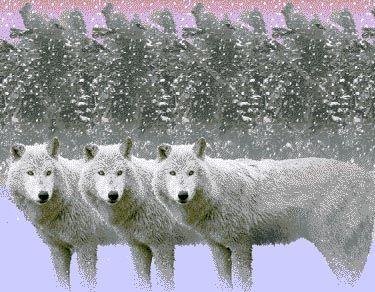 wolves3d.jpg